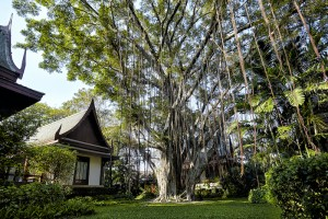 chiva-som_banyan_tree_0