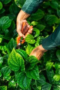 Chiva-Som Organic Garden