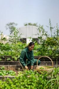 Chiva-Som Organic Garden - Gardener